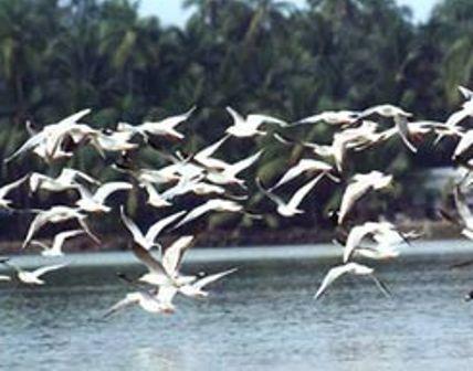 birds-kadalundi