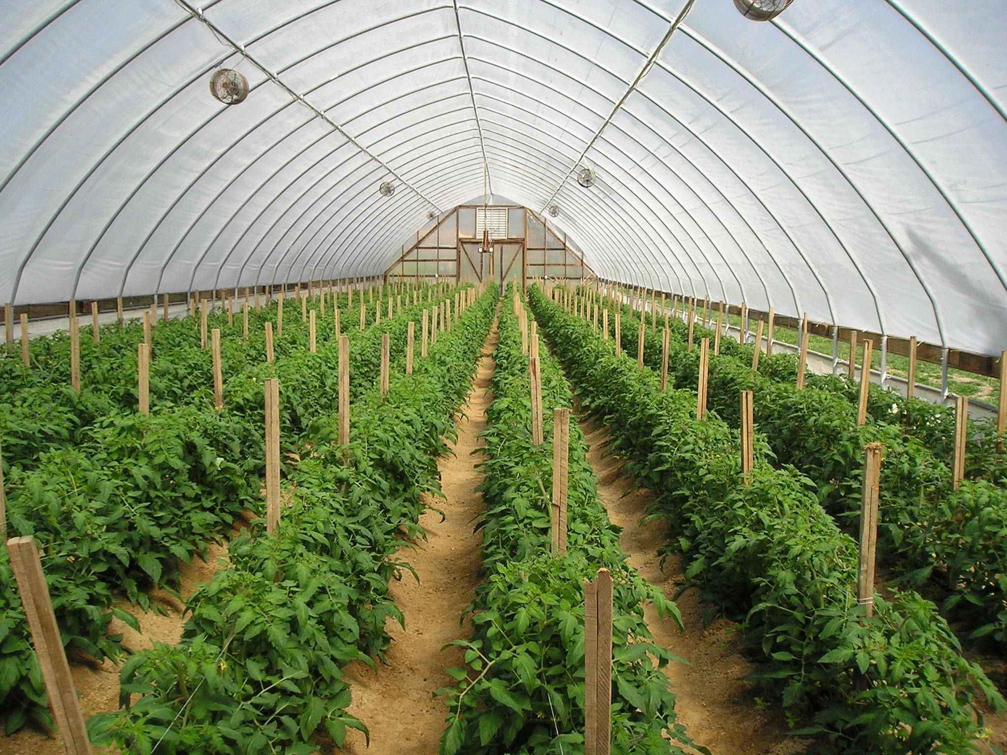 greenhouse_teaserpic_2