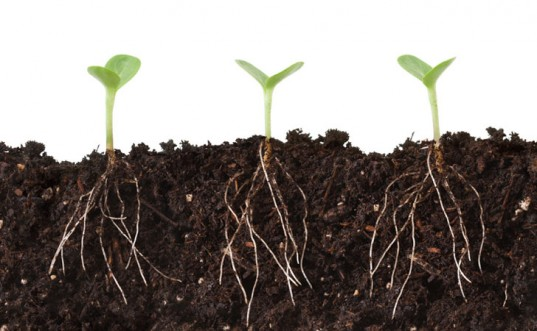 shutterstock-plant-roots-537x331