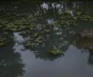 പരപ്പനങ്ങാടി കല്പ്പുഴയുടെ നവീകരണ പ്രവര്ത്തനം തുടങ്ങി