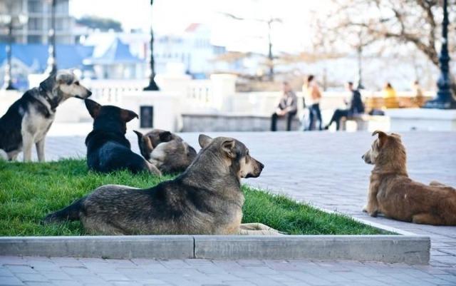 4836533-The_Street_Dogs_of_Sevastopol_Sevastopol