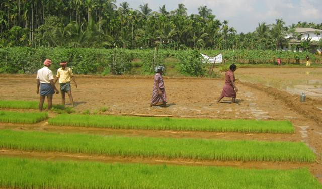 Aug Kodur Agri. Photo  1