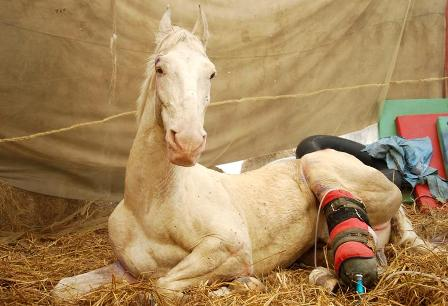 dehradun-santosh-hindustan-injured-police-dehradun-shaktiman_984b7f84-fae0-11e5-bced-6695953481e2