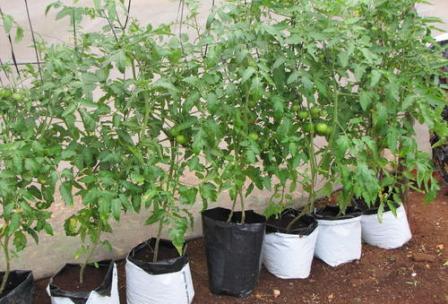 verti-grow-bag-500x500