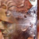 പി കൃഷ്ണപിള്ള സ്മാരകസ്തൂപത്തിന്റെ ചില്ലുകള് തകര്ത്തു