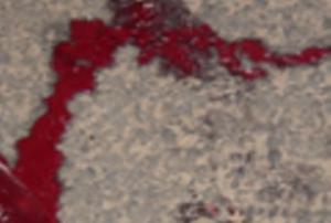കാസര്ഗോഡ് ദേശീയപാതയില് കാറും ലോറിയും കൂട്ടിയിടിച്ച് നാലുപേര് മരിച്ചു