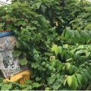 പരപ്പനങ്ങാടിയിലെ പിഡബ്ല്യുഡി റോഡുകള് പോലീസിന്റെ തൊണ്ടിവാഹനങ്ങളുടെ ഡംമ്പിംഗ് കേന്ദ്രങ്ങളോ?